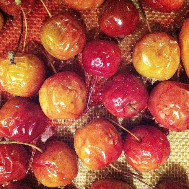 Roasted crabapples. Getting ready to make crabapple chutney. #food #preserving #inseason #fall #foraging