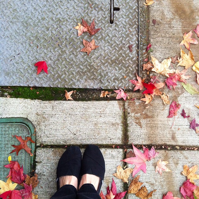Autumn leaves start to fall. #fall #changeofseasons #leaves #celebrate